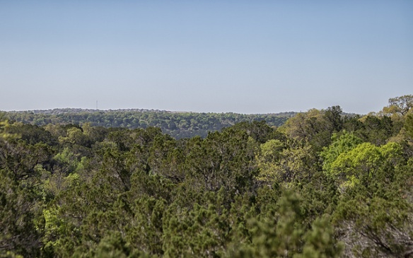 Cedar As Far As You Can See - photo credit H. Valey